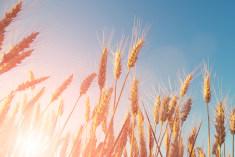 secteur-agroalimentaire